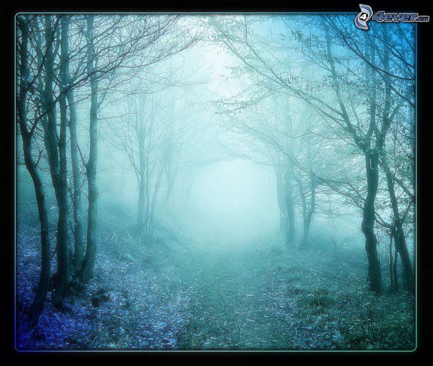 pista forestal, niebla