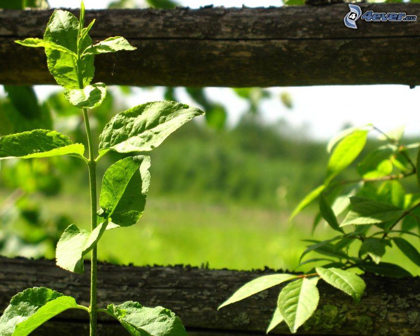 plantas, cerca de madera vieja
