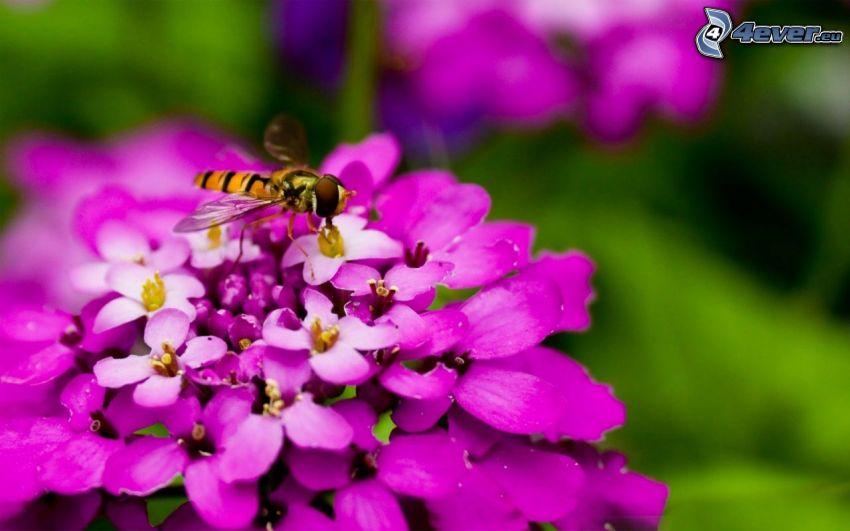abeja en flor, flor rosa