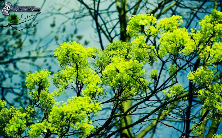 árbol, verde, ramas