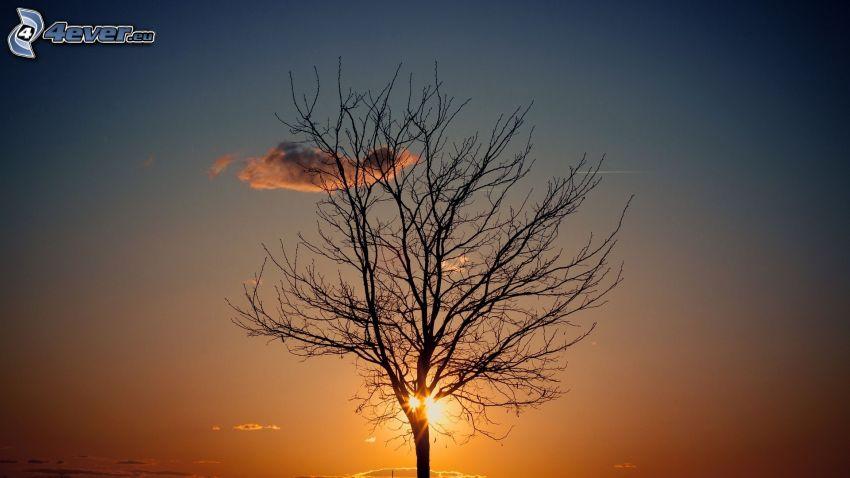 árbol deshojado, árbol solitario, sol, nube