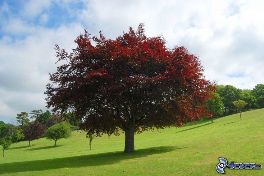 árbol ramificado, árbol en el prado, césped