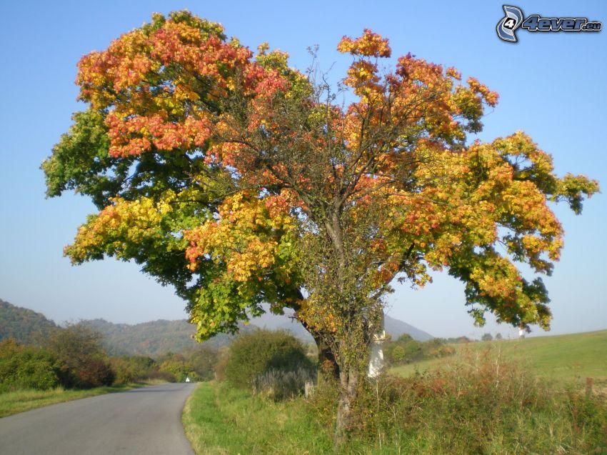 árbol ramificado, camino