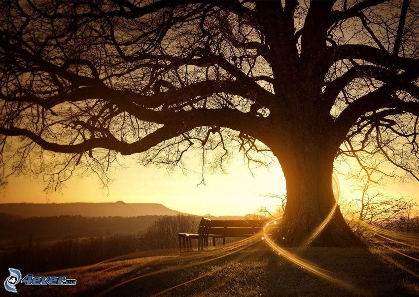 árbol ramificado, rayos de sol, bancos