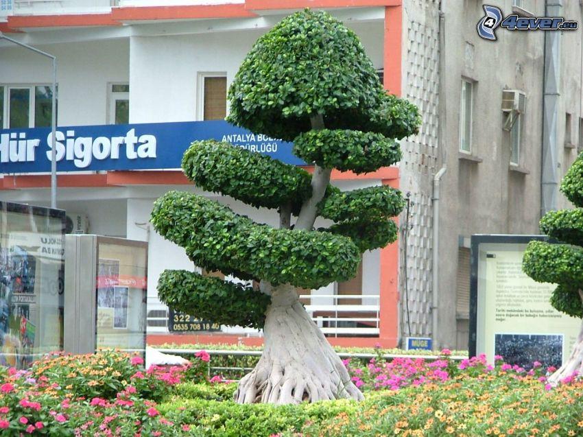 bonsai, plaza, árbol de hoja caduca