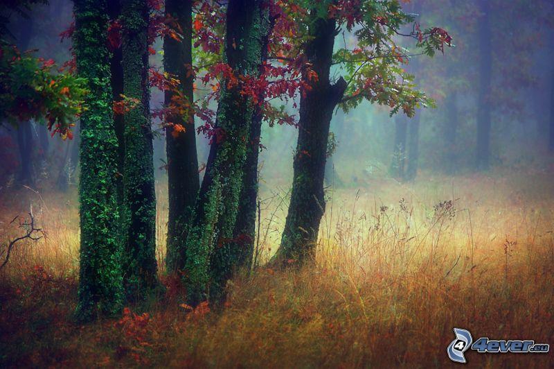 bosque, árboles, hiedra, hierba seca