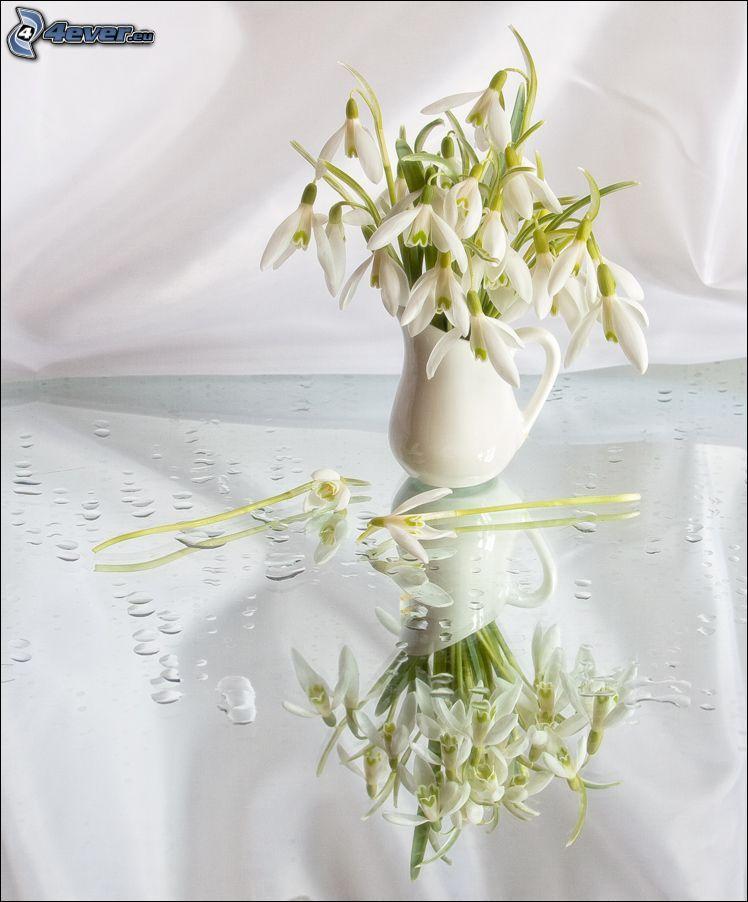 campanilla de invierno, florero, gotas de agua, reflejo