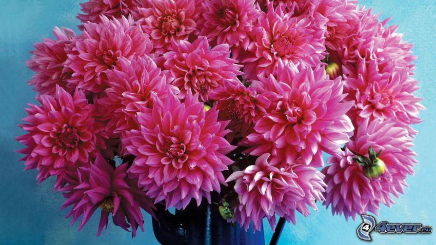 dalia, flores de color rosa, flores en un florero