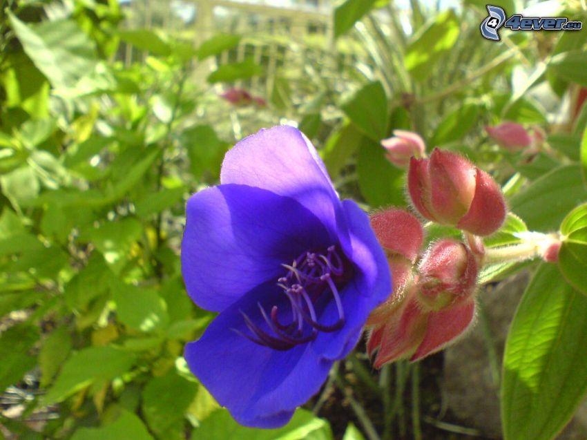 flor, planta, naturaleza