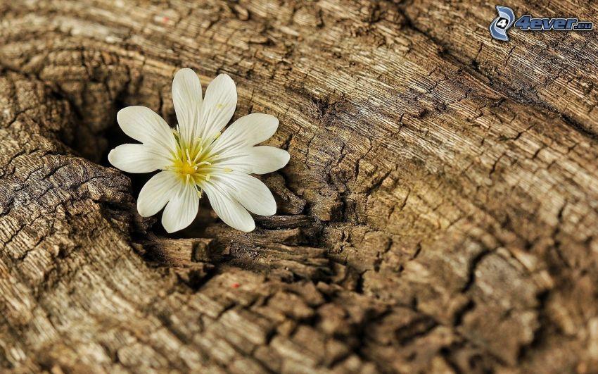 flor blanca, corteza de árbol