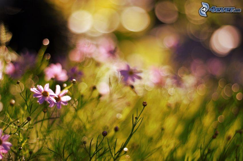 flores de campo, hierba