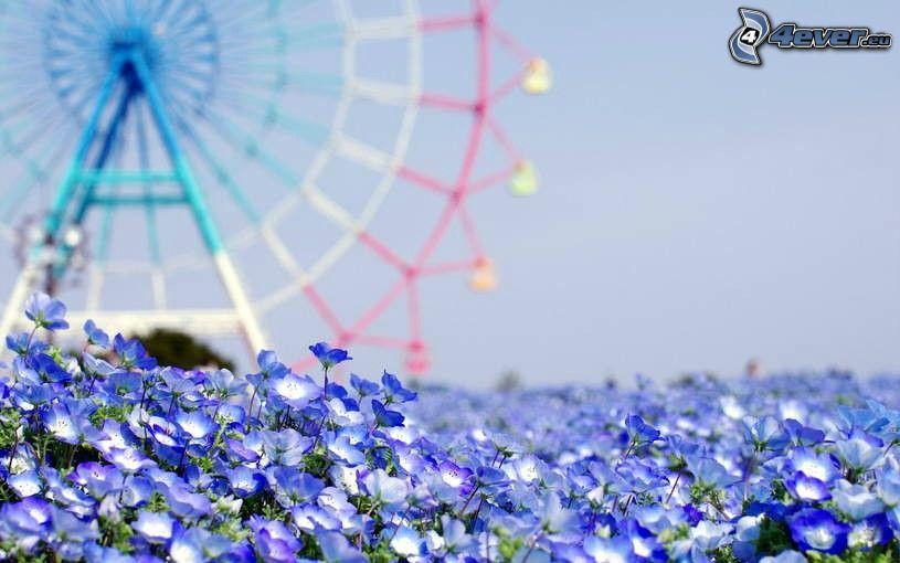 flores de color azul, carrusel