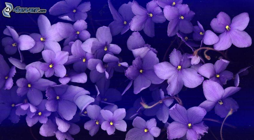flores de coolor violeta
