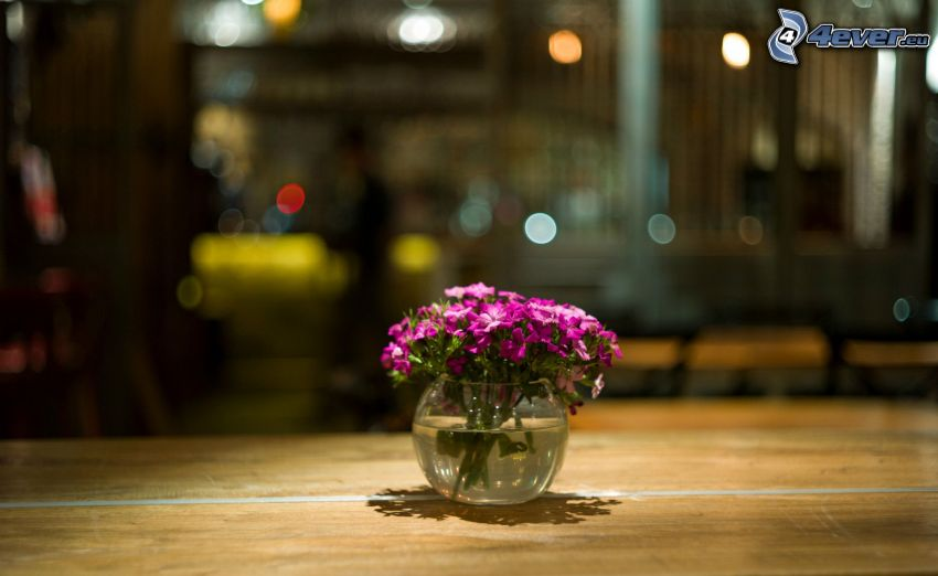 flores en un florero, flores de coolor violeta
