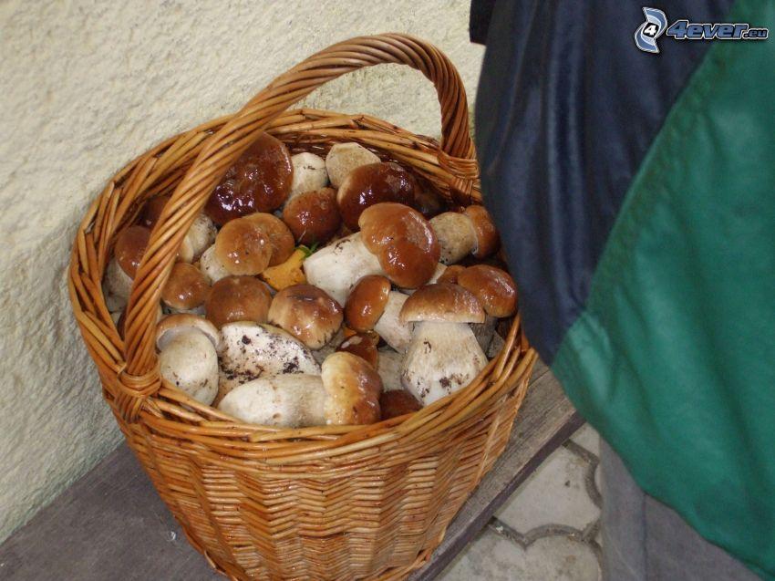 cesta llena de hongos, hongos
