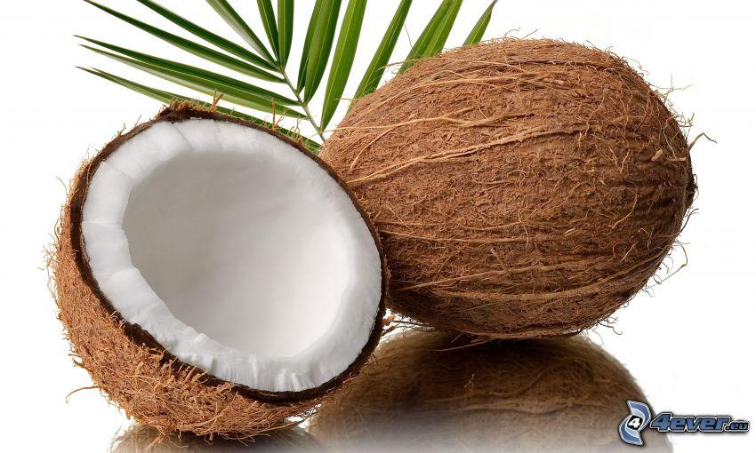 el nuez de coco