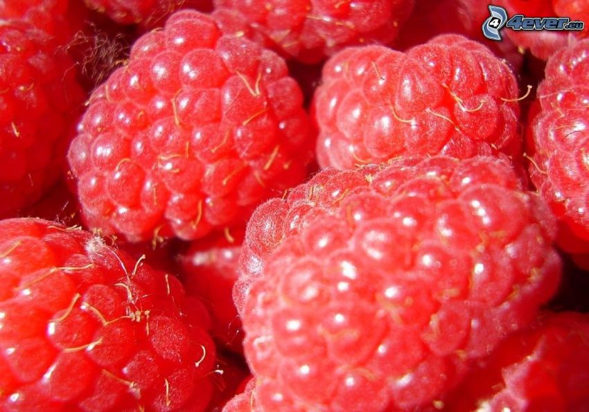 frambuesas, fruta, comida