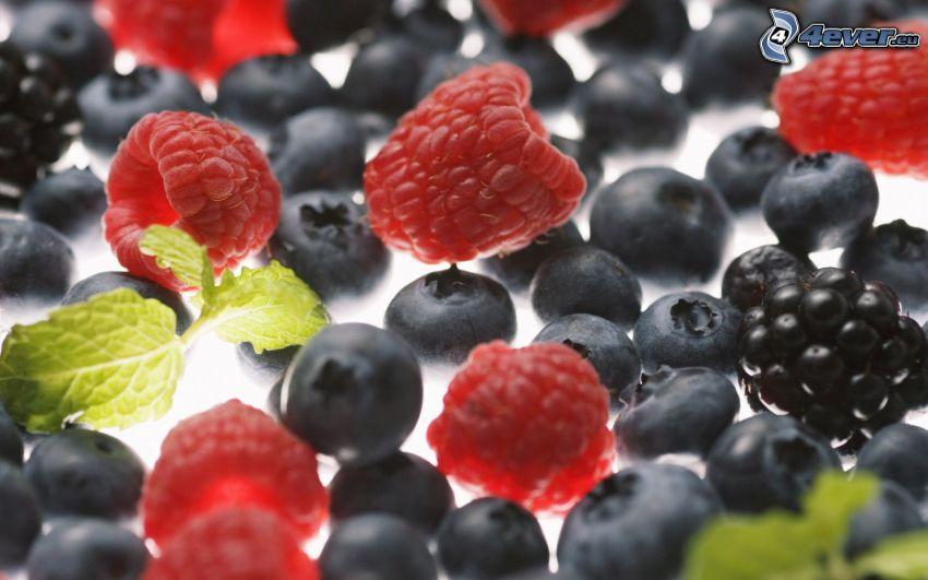fruto forestal, frambuesas, moras, arándanos