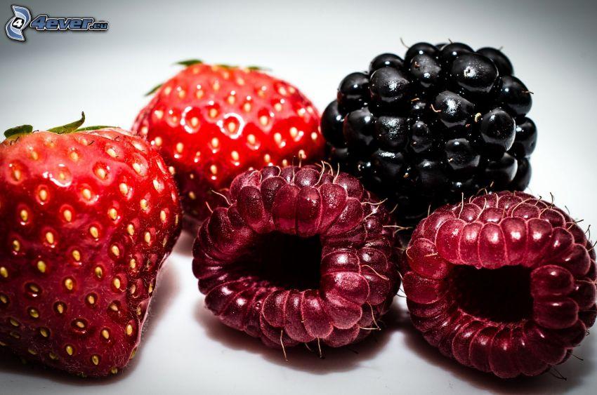 fruto forestal, mora, frambuesas, fresas