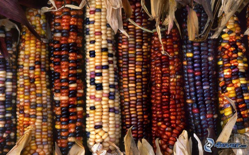 maíz seco