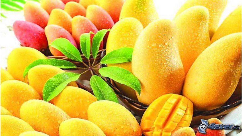 mango, hojas verdes, ramita