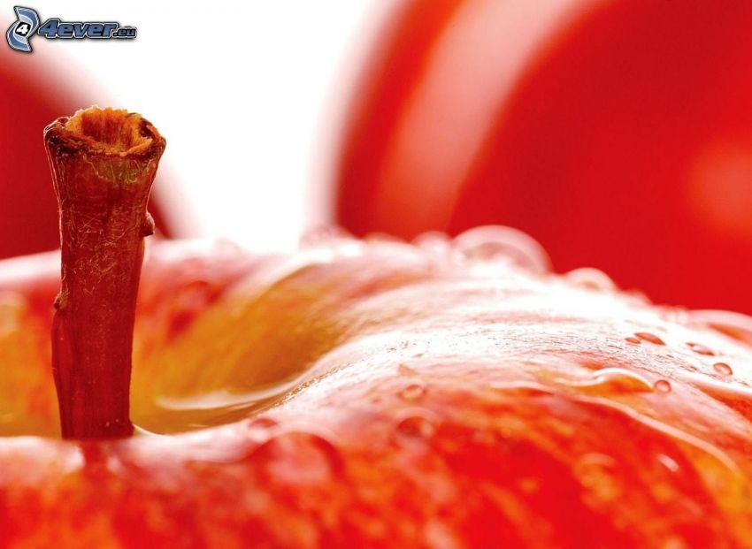 manzana, vástago
