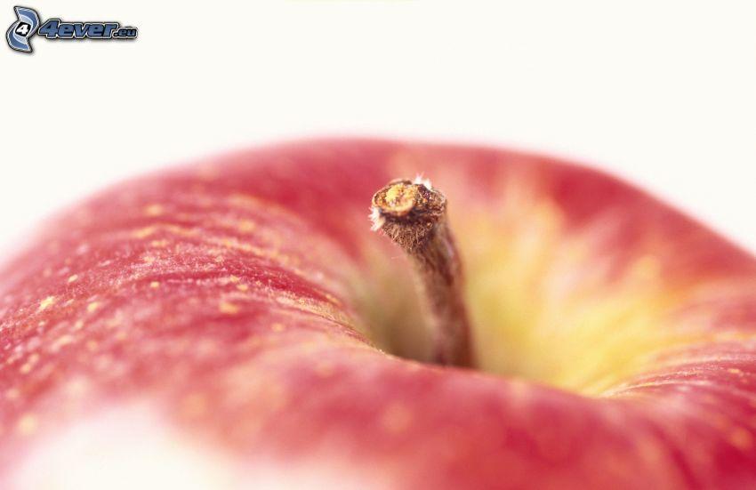 manzana roja, vástago