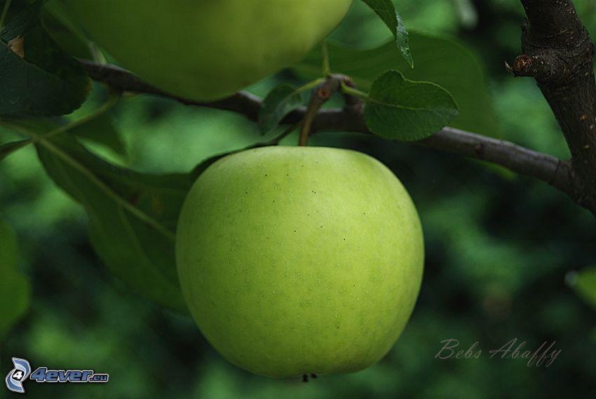 manzana verde, hojas, fruta