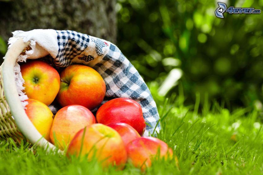 manzanas, cesta, hierba