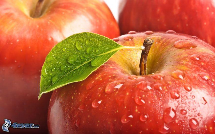 manzanas, hoja verde