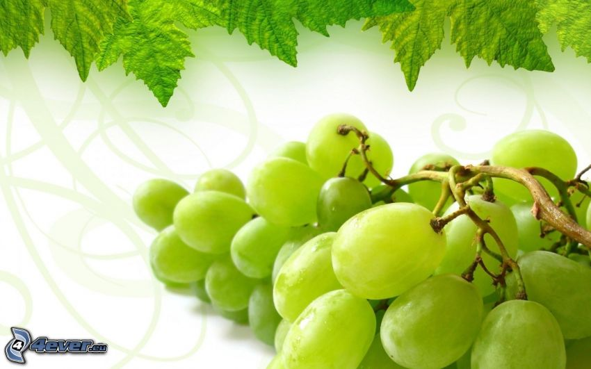 racimo de uvas, hojas verdes