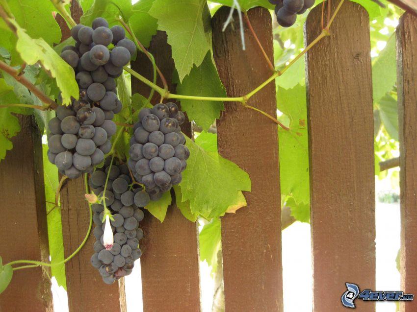 uvas, cerco de madera