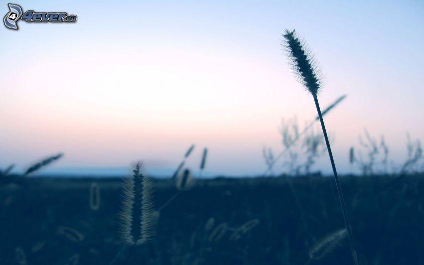 grano, paja de hierba