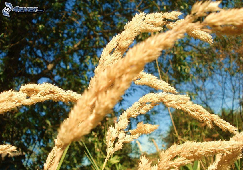 hierba seca