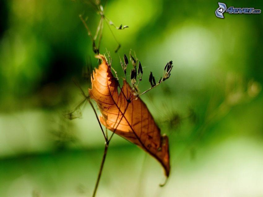 hoja de otoño, plantas secas