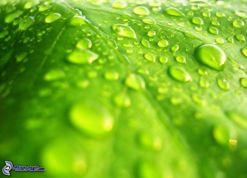 hoja nebulizada, gotas de agua