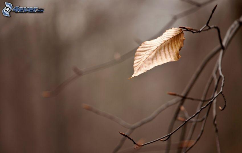 hoja seca, ramas