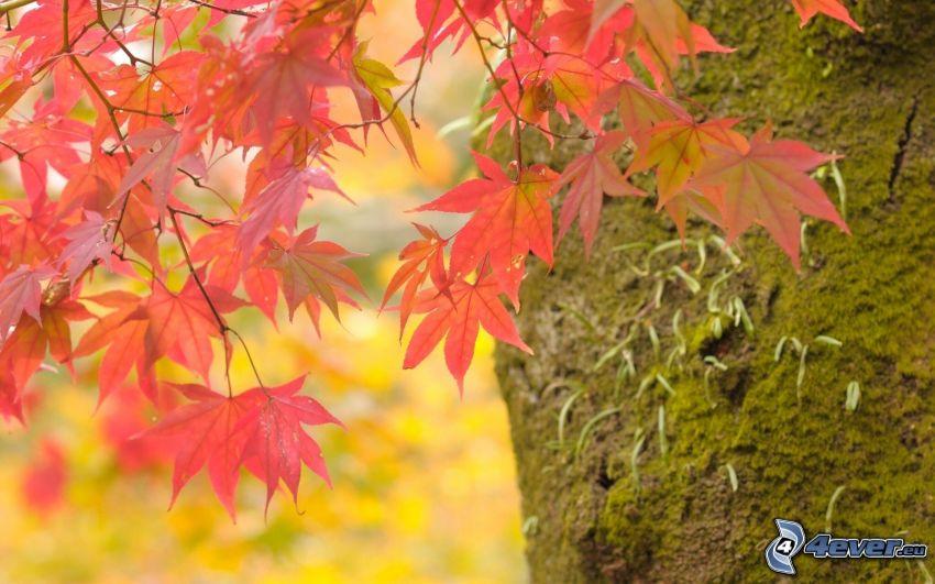 hojas rojas, musgo