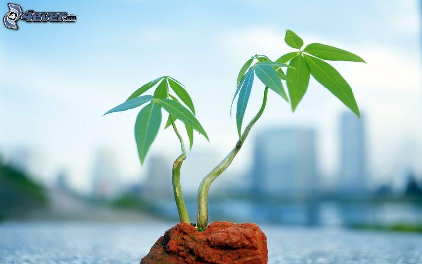 hojas verdes en una rama, flor