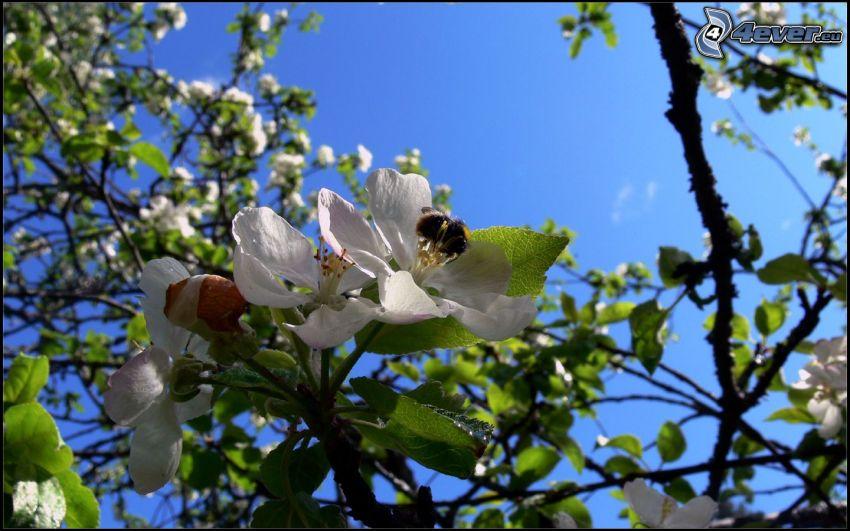 la floración de árboles