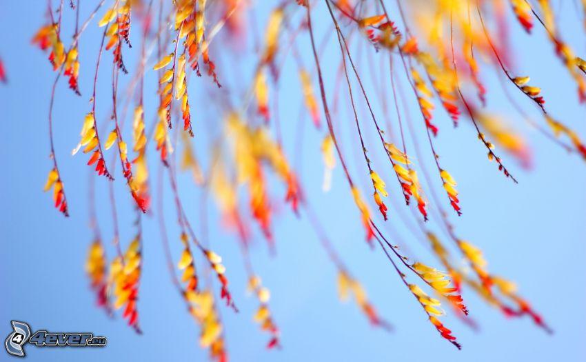 las hojas coloradas