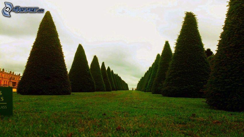 líneas de árboles, hierba
