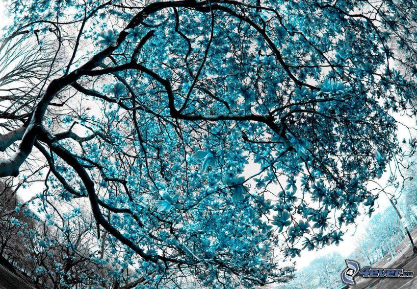 magnolia, flores de color azul