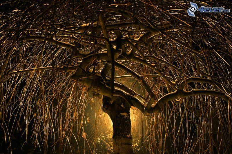 mimbre, árbol