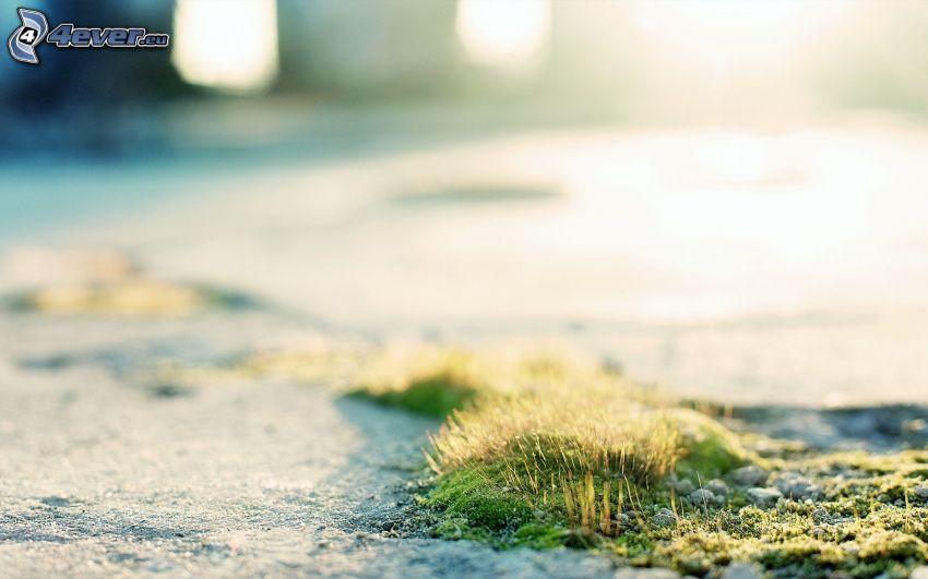 musgo, hierba seca