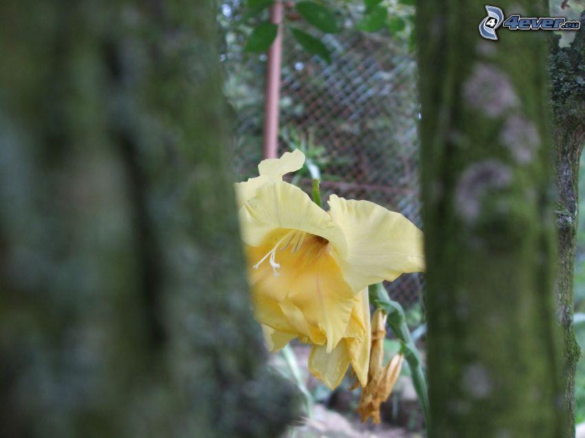 narciso, flor amarilla, árboles, troncos