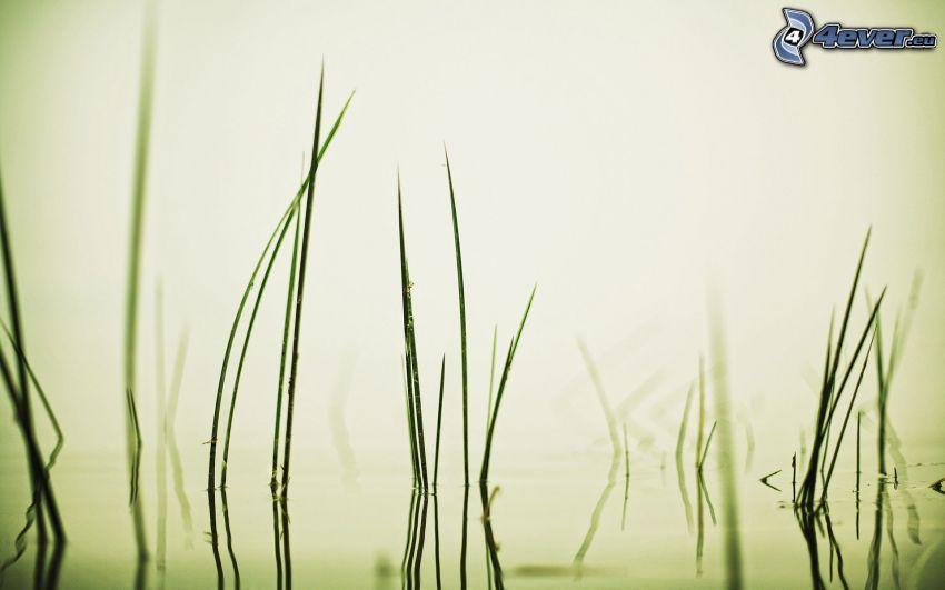 paja de hierba, agua