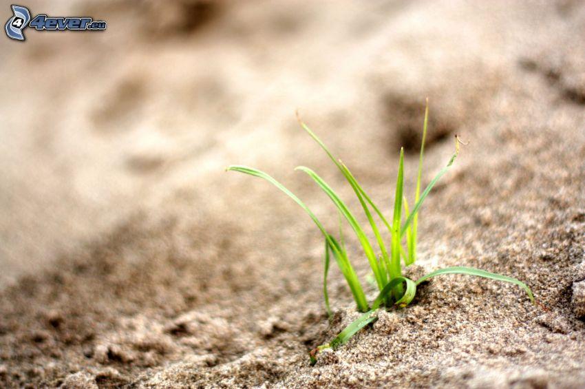 paja de hierba, arena