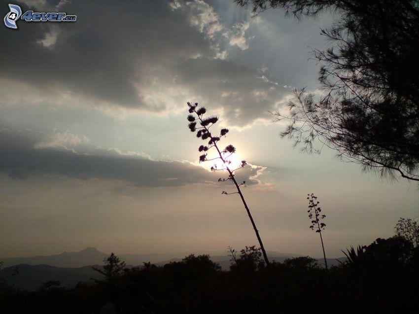 paja de hierba, el sol detrás de los nubes