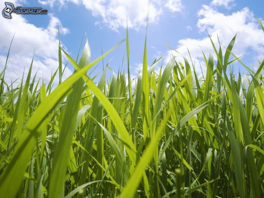 paja de hierba, nubes